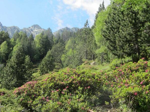 Vall Ferera, between Àreu and Baiau on the Senda, part of the Parc Natural de l'Alt Pirineu